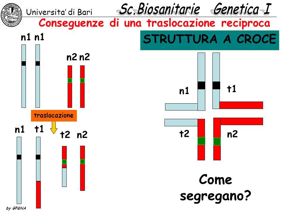 Conseguenze di una traslocazione reciproca Universita di Bari by GP&NA n1 n2 t1 t2n2 n1 Come segregano? traslocazione t1 t2 n1 n2 STRUTTURA A CROCE