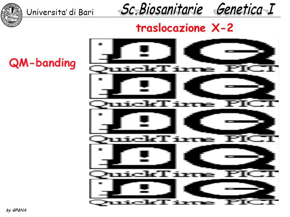 traslocazione X-2 QM-banding Universita di Bari by GP&NA