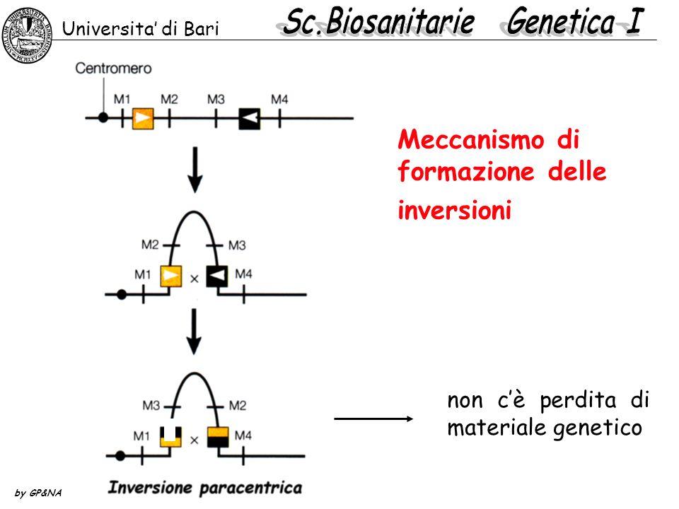 Meccanismo di formazione delle inversioni non cè perdita di materiale genetico Universita di Bari by GP&NA