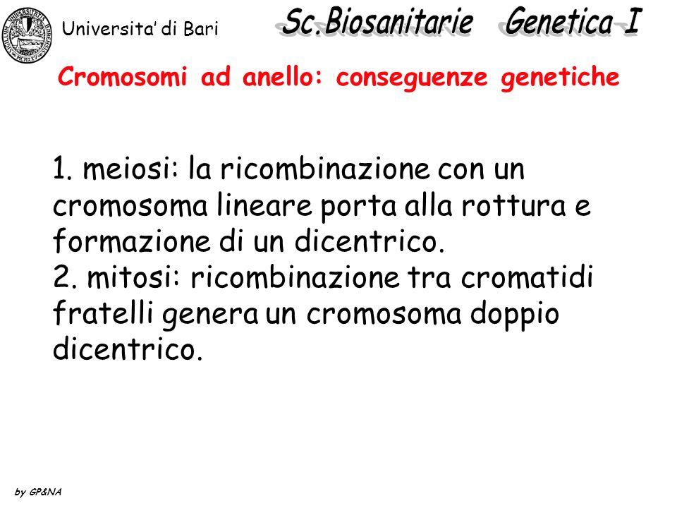 Cromosomi ad anello: conseguenze genetiche 1. meiosi: la ricombinazione con un cromosoma lineare porta alla rottura e formazione di un dicentrico. 2.