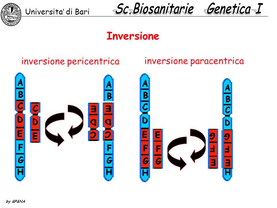 Inversione inversione pericentrica inversione paracentrica Universita di Bari by GP&NA