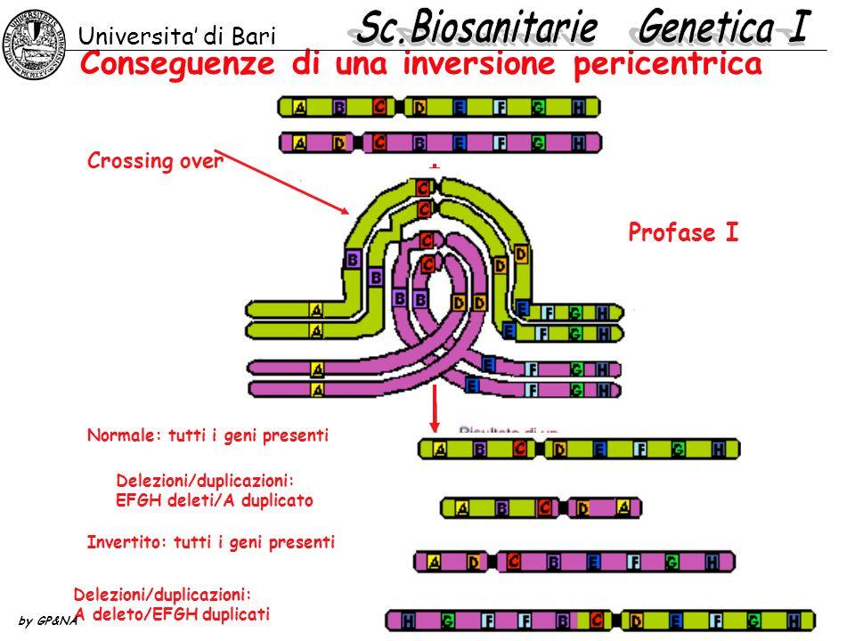 Conseguenze di una inversione pericentrica Profase I Normale: tutti i geni presenti Delezioni/duplicazioni: EFGH deleti/A duplicato Invertito: tutti i