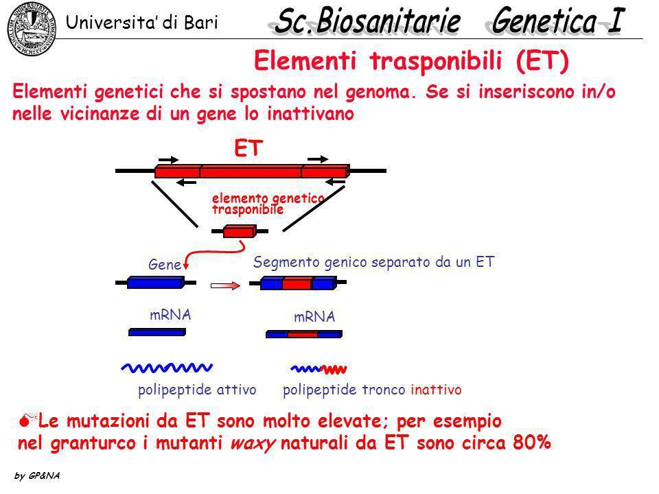 Elementi trasponibili (ET) Le mutazioni da ET sono molto elevate; per esempio nel granturco i mutanti waxy naturali da ET sono circa 80% Elementi gene