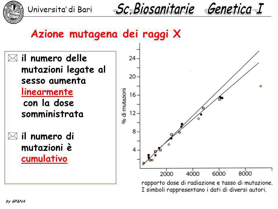 Azione mutagena dei raggi X *il numero delle mutazioni legate al sesso aumenta linearmente con la dose somministrata *il numero di mutazioni è cumulat