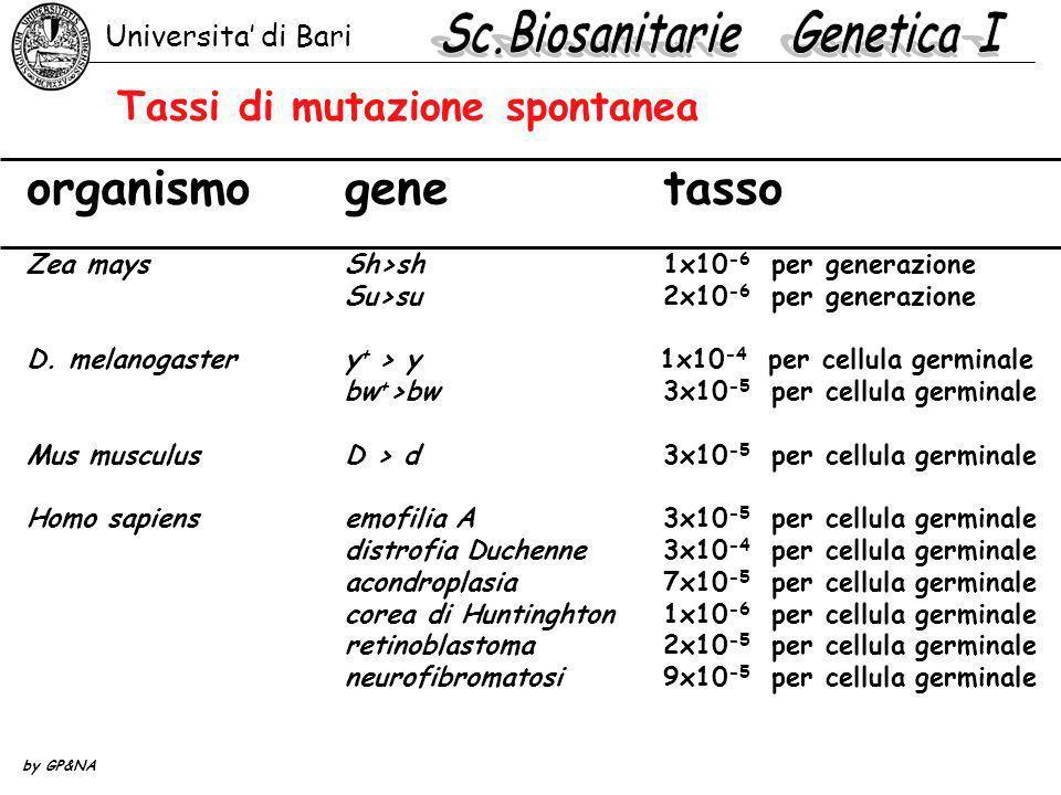 Tassi di mutazione spontanea organismogenetasso Zea maysSh>sh1x10 -6 per generazione Su>su2x10 -6 per generazione D. melanogastery + > y 1x10 -4 per c