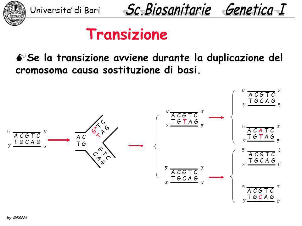 ClB: test per la selezione di mutazioni X-linked indotte in D.melanogaster ClB .