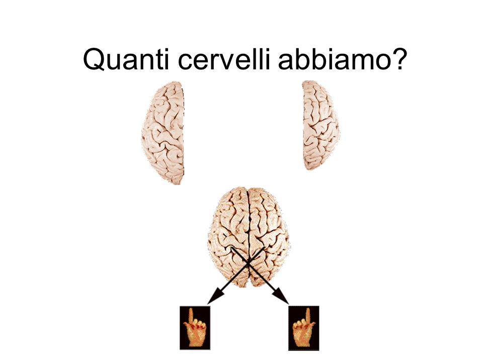 Quanti cervelli abbiamo?
