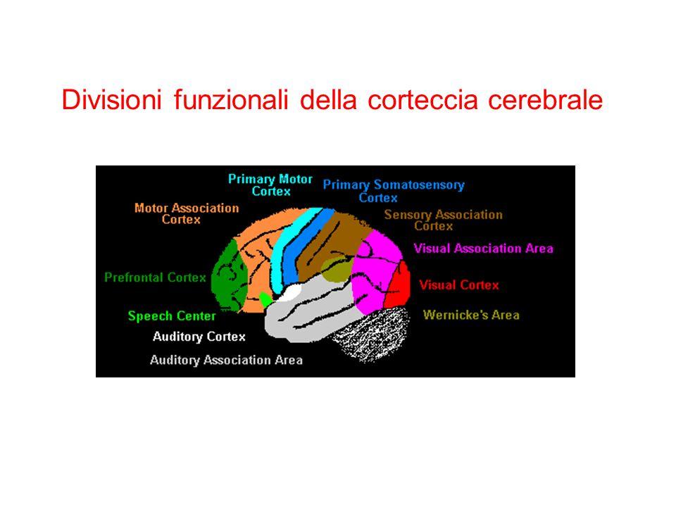 Divisioni funzionali della corteccia cerebrale