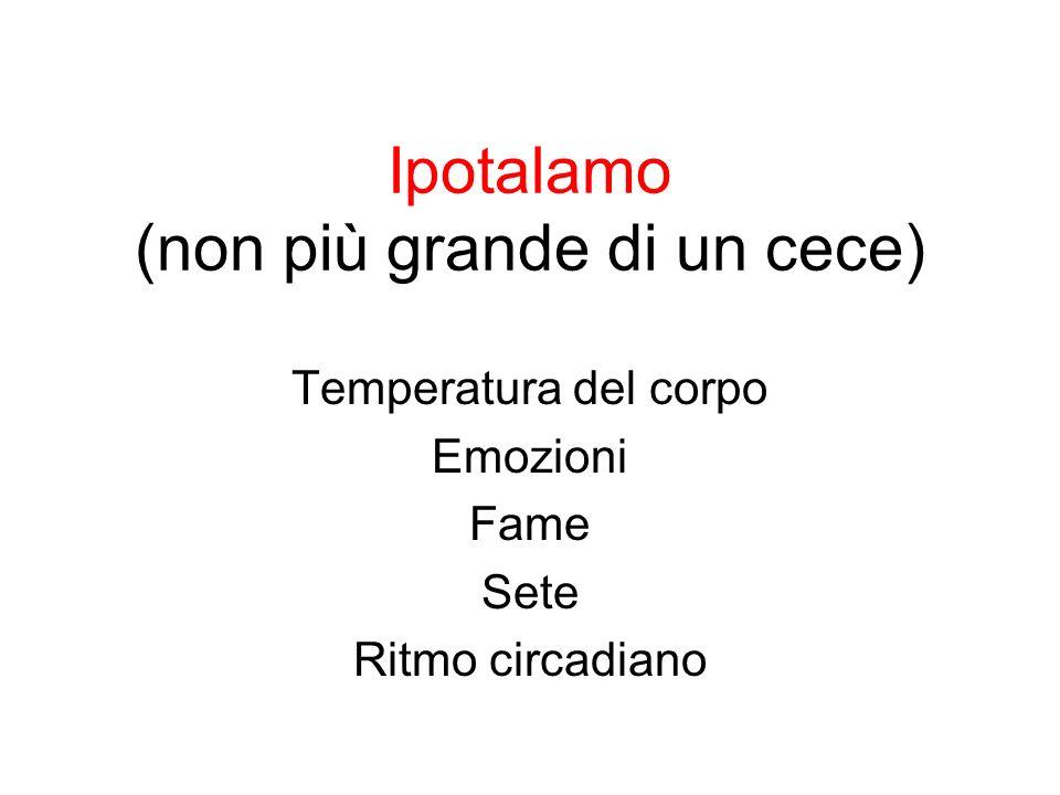 Ipotalamo (non più grande di un cece) Temperatura del corpo Emozioni Fame Sete Ritmo circadiano