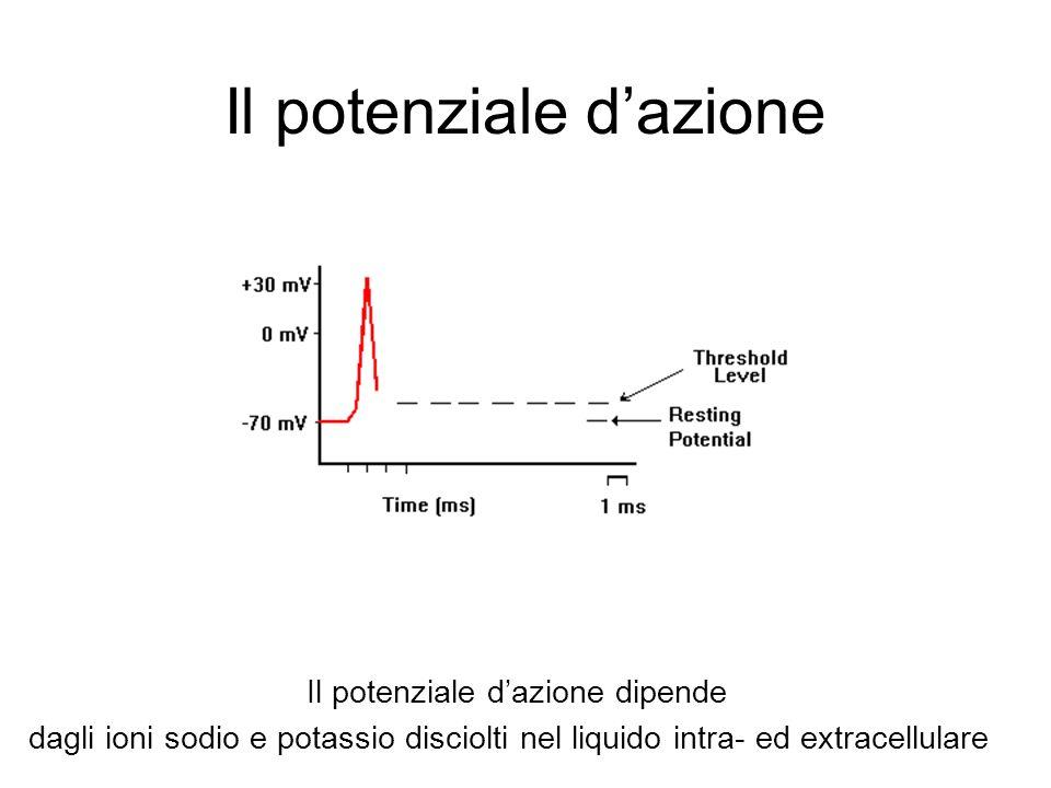 Il potenziale dazione Il potenziale dazione dipende dagli ioni sodio e potassio disciolti nel liquido intra- ed extracellulare