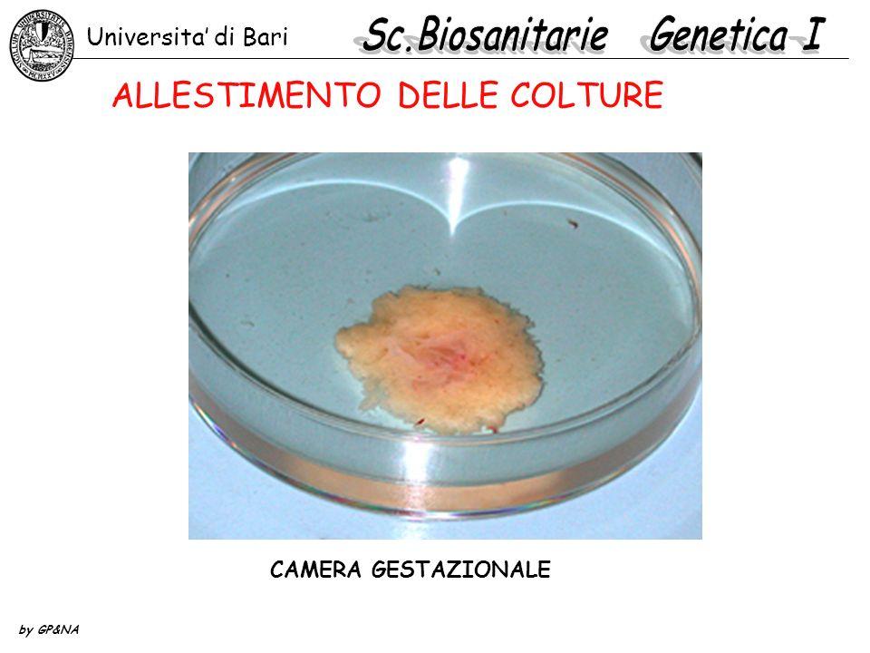 CAMERA GESTAZIONALE Universita di Bari by GP&NA ALLESTIMENTO DELLE COLTURE