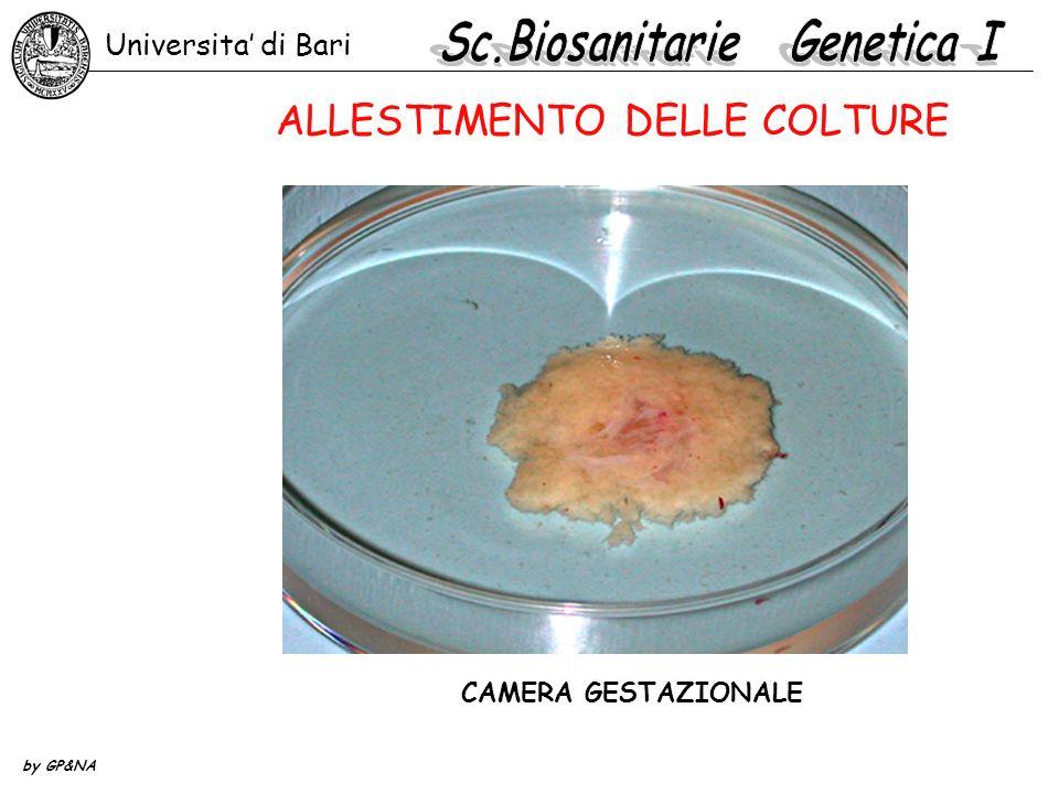 CAMERA GESTAZIONALE E SACCO VITELLINO Universita di Bari by GP&NA ALLESTIMENTO DELLE COLTURE