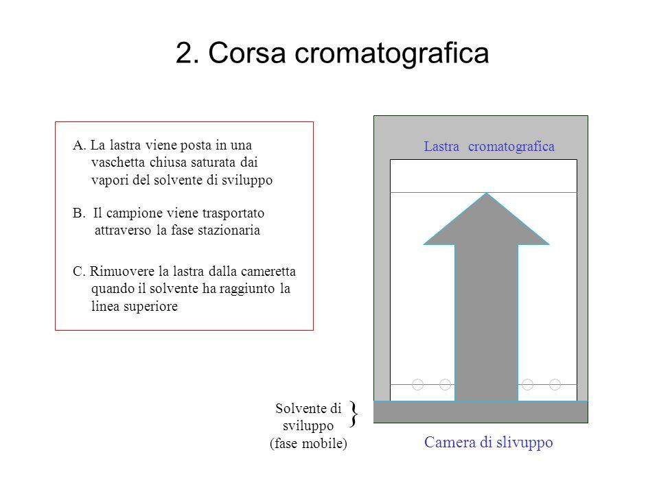 2. Corsa cromatografica Lastra cromatografica Camera di slivuppo A. La lastra viene posta in una vaschetta chiusa saturata dai vapori del solvente di