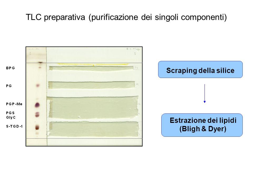 TLC preparativa (purificazione dei singoli componenti) Estrazione dei lipidi (Bligh & Dyer) Scraping della silice