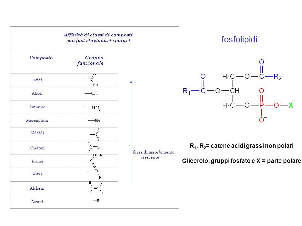 Affinità di classi di composti con fasi stazionarie polari Composto Gruppo funzionale forza di assorbimento crescente Acidi Alcoli Ammine Mercaptani A