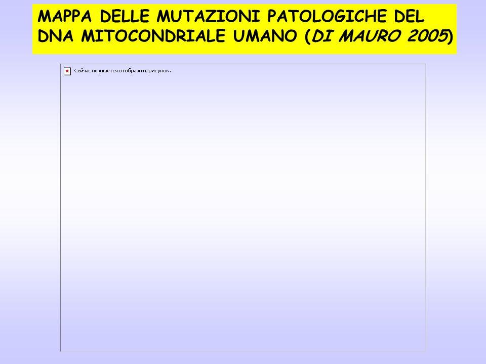 MAPPA DELLE MUTAZIONI PATOLOGICHE DEL DNA MITOCONDRIALE UMANO (DI MAURO 2005)