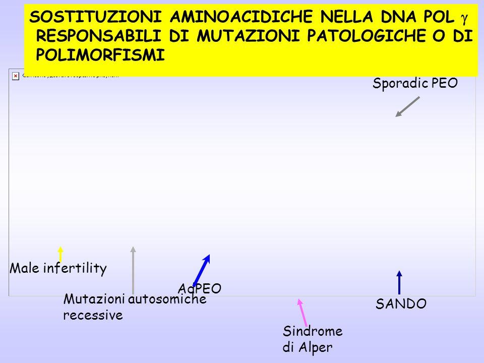 SOSTITUZIONI AMINOACIDICHE NELLA DNA POL RESPONSABILI DI MUTAZIONI PATOLOGICHE O DI POLIMORFISMI AdPEO Sporadic PEO Sindrome di Alper SANDO Male infer