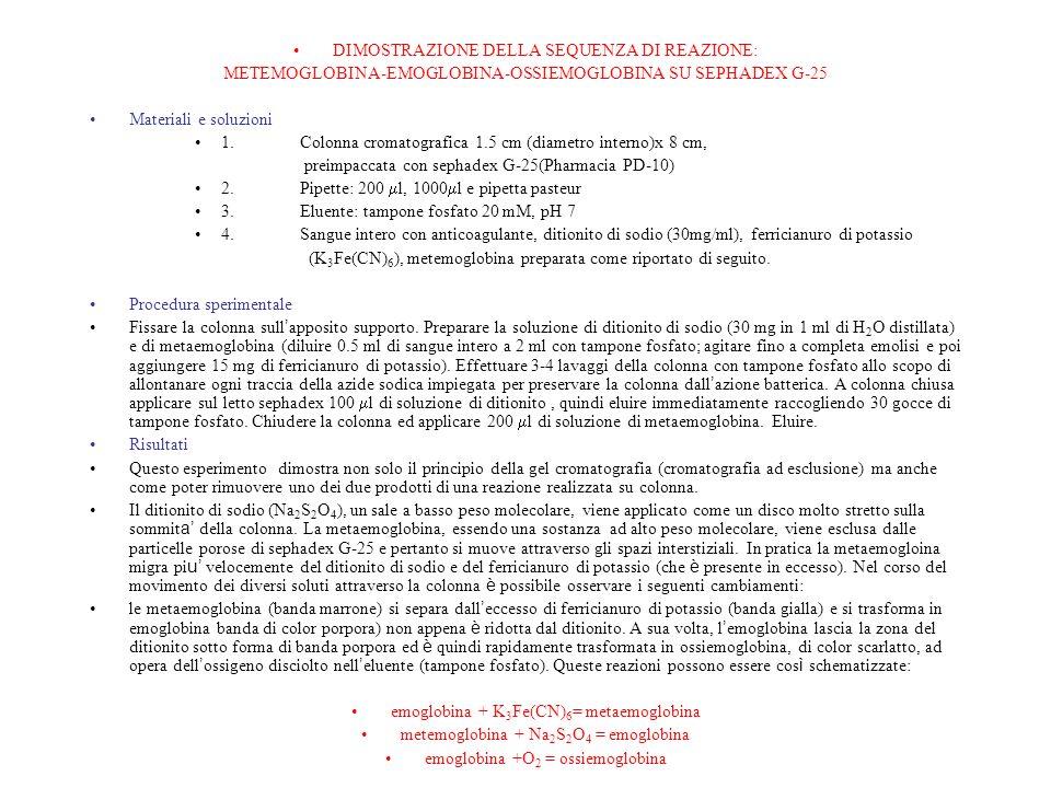DIMOSTRAZIONE DELLA SEQUENZA DI REAZIONE: METEMOGLOBINA-EMOGLOBINA-OSSIEMOGLOBINA SU SEPHADEX G-25 Materiali e soluzioni 1.Colonna cromatografica 1.5 cm (diametro interno)x 8 cm, preimpaccata con sephadex G-25(Pharmacia PD-10) 2.Pipette: 200 l, 1000 l e pipetta pasteur 3.Eluente: tampone fosfato 20 mM, pH 7 4.Sangue intero con anticoagulante, ditionito di sodio (30mg/ml), ferricianuro di potassio (K 3 Fe(CN) 6 ), metemoglobina preparata come riportato di seguito.