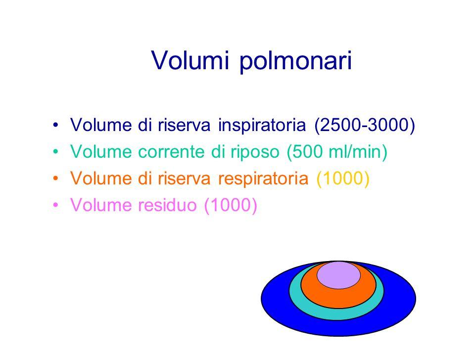 Volumi polmonari Volume di riserva inspiratoria (2500-3000) Volume corrente di riposo (500 ml/min) Volume di riserva respiratoria (1000) Volume residu