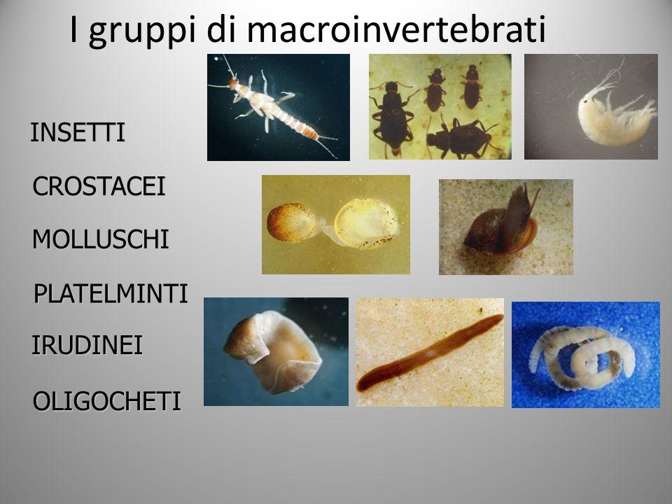I gruppi di macroinvertebratiINSETTI CROSTACEI MOLLUSCHI PLATELMINTI IRUDINEI OLIGOCHETI