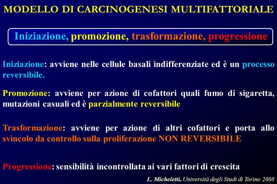 MODELLO DI CARCINOGENESI MULTIFATTORIALE Iniziazione, promozione, trasformazione, progressione Iniziazione: avviene nelle cellule basali indifferenziate ed è un processo reversibile.
