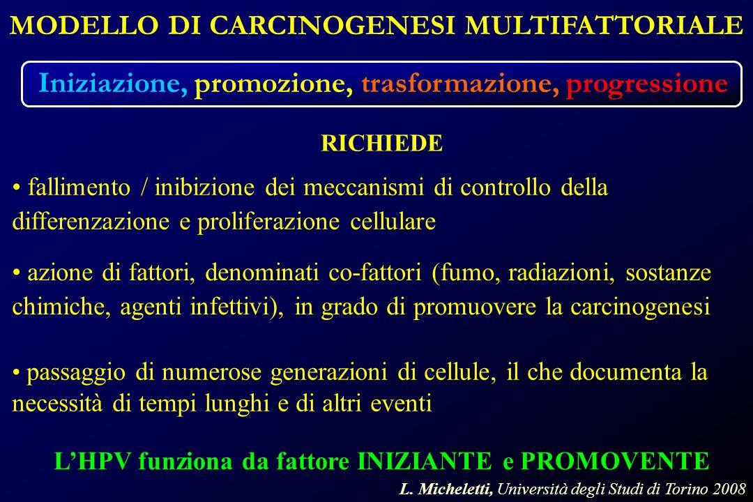 MODELLO DI CARCINOGENESI MULTIFATTORIALE Iniziazione, promozione, trasformazione, progressione LHPV funziona da fattore INIZIANTE e PROMOVENTE fallimento / inibizione dei meccanismi di controllo della differenzazione e proliferazione cellulare RICHIEDE azione di fattori, denominati co-fattori (fumo, radiazioni, sostanze chimiche, agenti infettivi), in grado di promuovere la carcinogenesi passaggio di numerose generazioni di cellule, il che documenta la necessità di tempi lunghi e di altri eventi L.