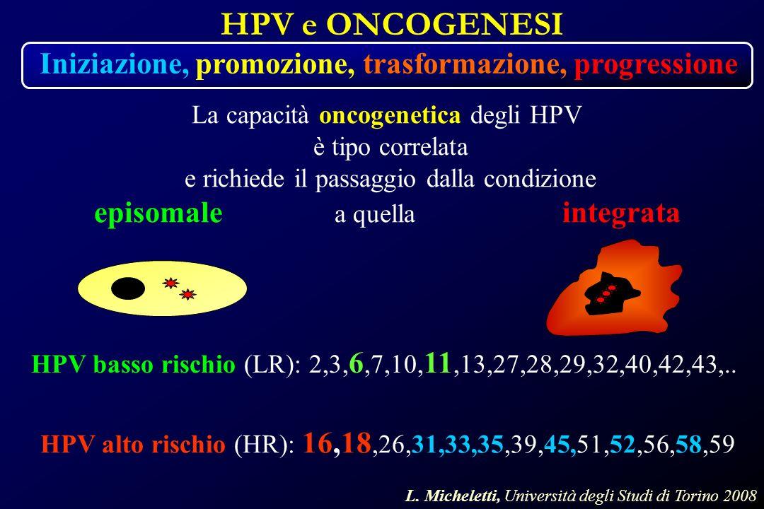 HPV e ONCOGENESI HPV alto rischio (HR): 16,18,26,31,33,35,39,45,51,52,56,58,59 HPV basso rischio (LR): 2,3, 6,7,10, 11,13,27,28,29,32,40,42,43,..