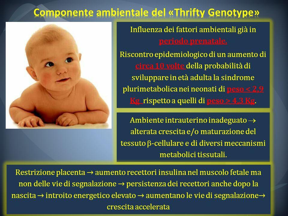 Influenza dei fattori ambientali già in periodo prenatale. Riscontro epidemiologico di un aumento di circa 10 volte della probabilità di sviluppare in