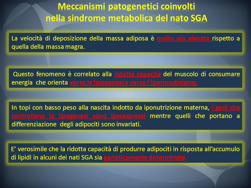 E verosimile che la ridotta capacità di produrre adipociti in risposta allaccumulo di lipidi in alcuni dei nati SGA sia geneticamente determinata. In