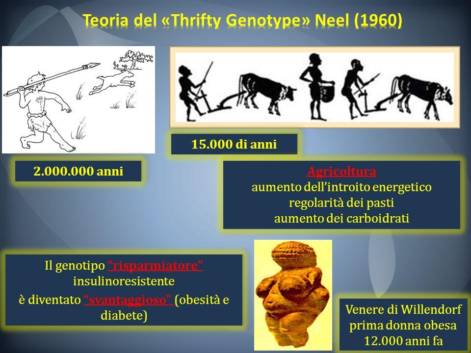 2.000.000 anni 15.000 di anni Il genotipo risparmiatore insulinoresistente è diventato svantaggioso (obesità e diabete) Il genotipo risparmiatore insu