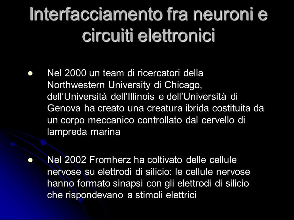 Nel 2000 un team di ricercatori della Northwestern University di Chicago, dellUniversità dellIllinois e dellUniversità di Genova ha creato una creatur