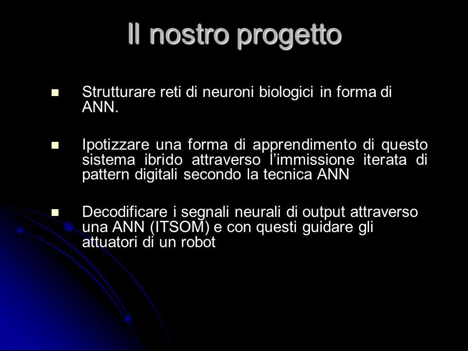 Il nostro progetto Strutturare reti di neuroni biologici in forma di ANN. Ipotizzare una forma di apprendimento di questo sistema ibrido attraverso li