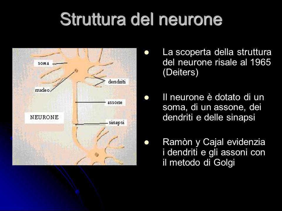 Struttura del neurone La scoperta della struttura del neurone risale al 1965 (Deiters) Il neurone è dotato di un soma, di un assone, dei dendriti e de