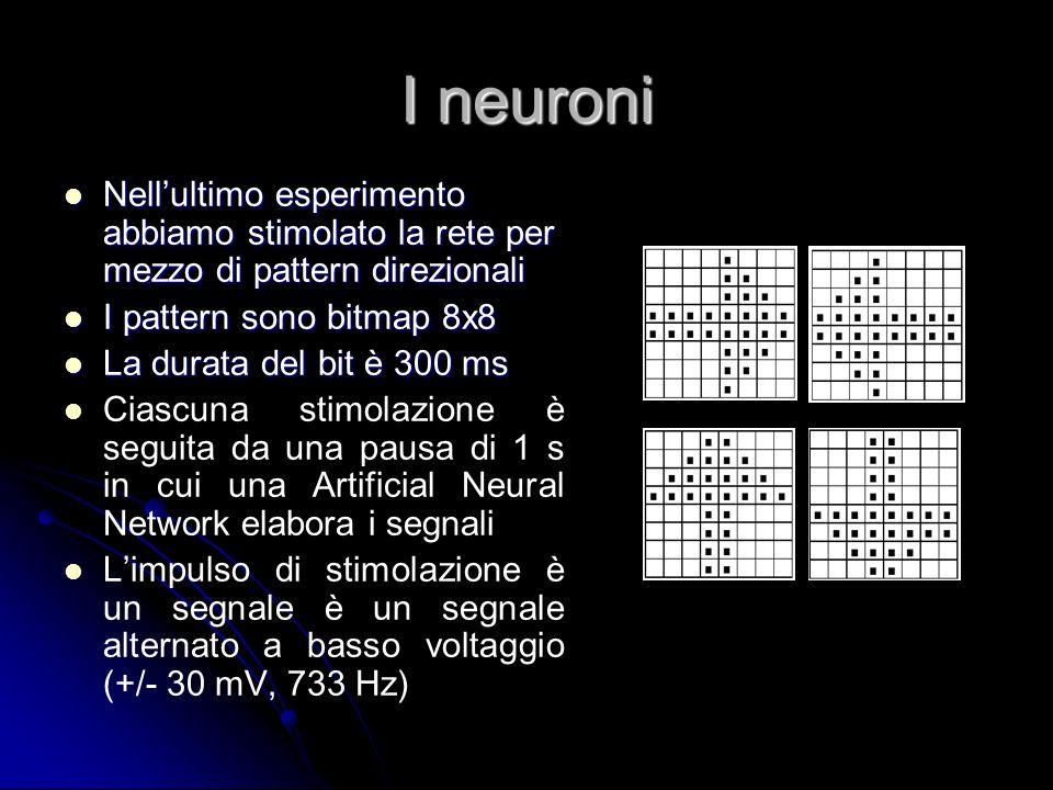 I neuroni Nellultimo esperimento abbiamo stimolato la rete per mezzo di pattern direzionali Nellultimo esperimento abbiamo stimolato la rete per mezzo
