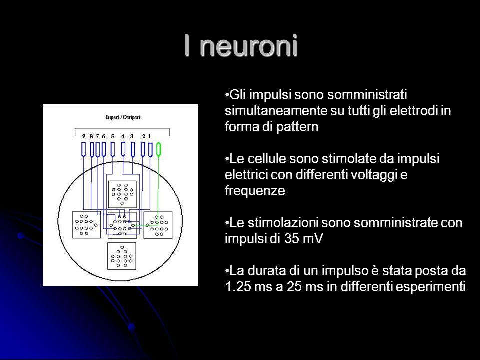 I neuroni Gli impulsi sono somministrati simultaneamente su tutti gli elettrodi in forma di pattern Le cellule sono stimolate da impulsi elettrici con