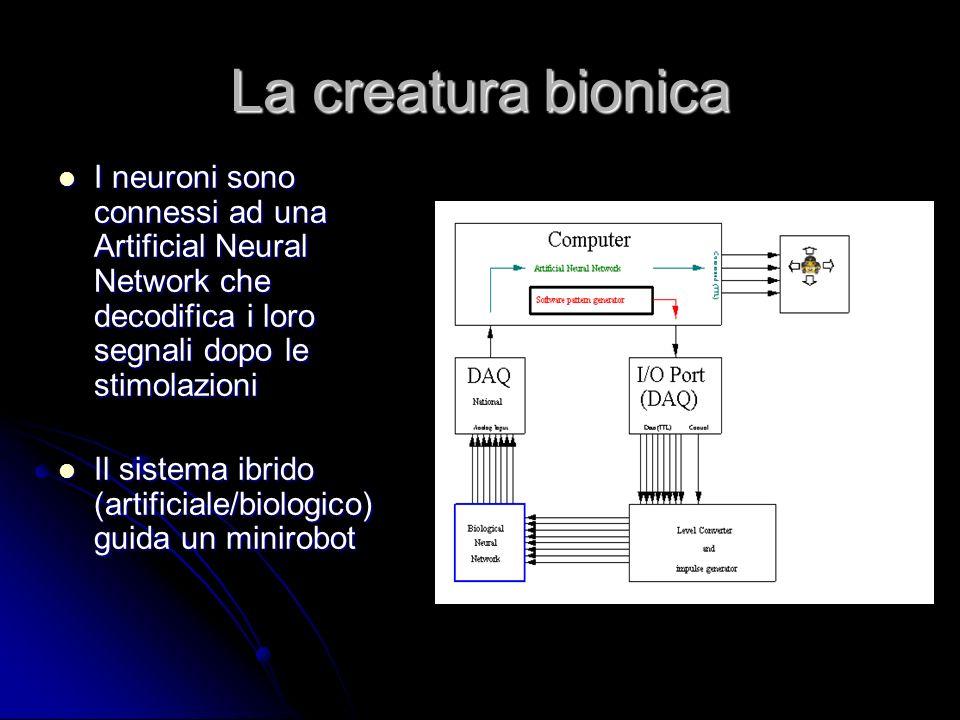 La creatura bionica I neuroni sono connessi ad una Artificial Neural Network che decodifica i loro segnali dopo le stimolazioni I neuroni sono conness