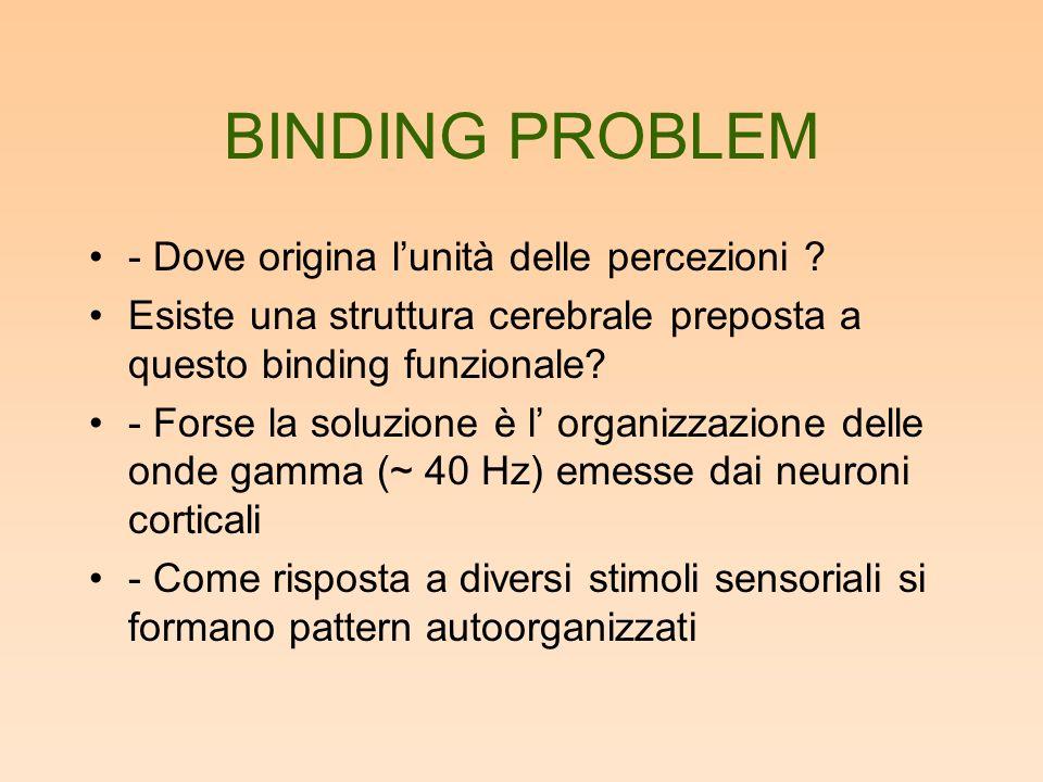 BINDING PROBLEM - Dove origina lunità delle percezioni .