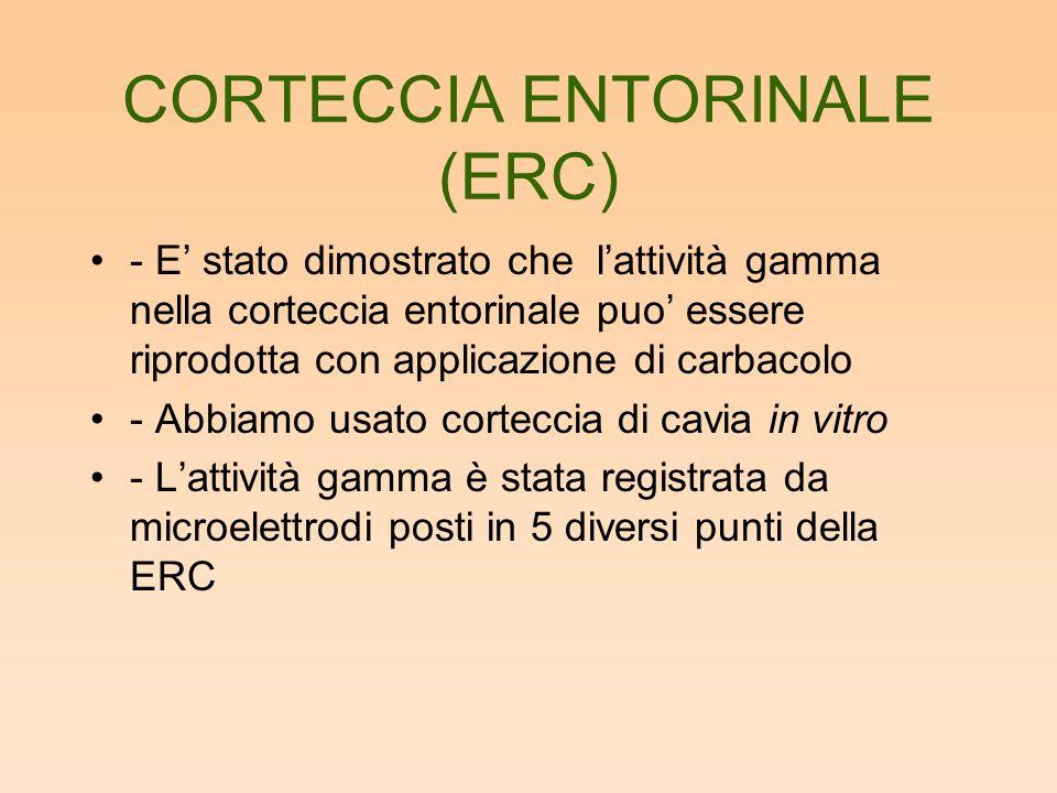 CORTECCIA ENTORINALE (ERC) - E stato dimostrato che lattività gamma nella corteccia entorinale puo essere riprodotta con applicazione di carbacolo - Abbiamo usato corteccia di cavia in vitro - Lattività gamma è stata registrata da microelettrodi posti in 5 diversi punti della ERC