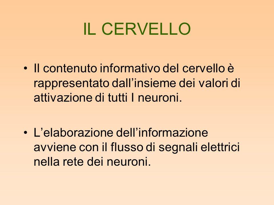 IL CERVELLO Il contenuto informativo del cervello è rappresentato dallinsieme dei valori di attivazione di tutti I neuroni. Lelaborazione dellinformaz