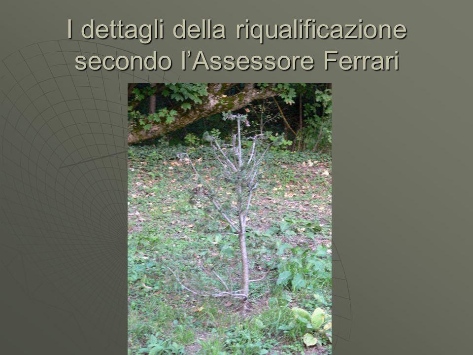 I dettagli della riqualificazione secondo lAssessore Ferrari