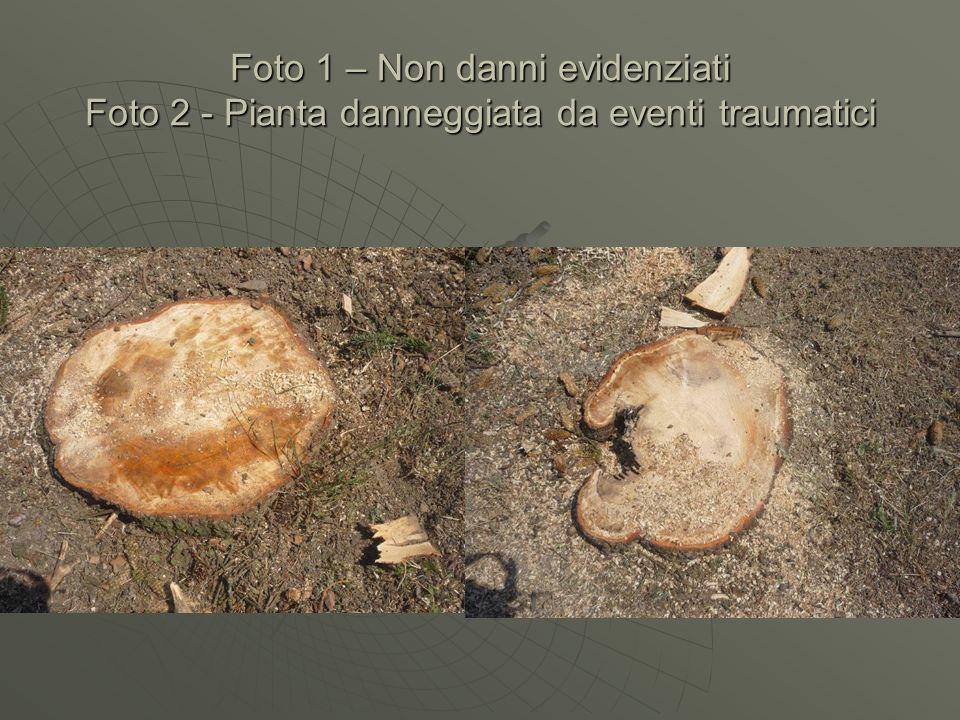 Foto 1 – Non danni evidenziati Foto 2 - Pianta danneggiata da eventi traumatici