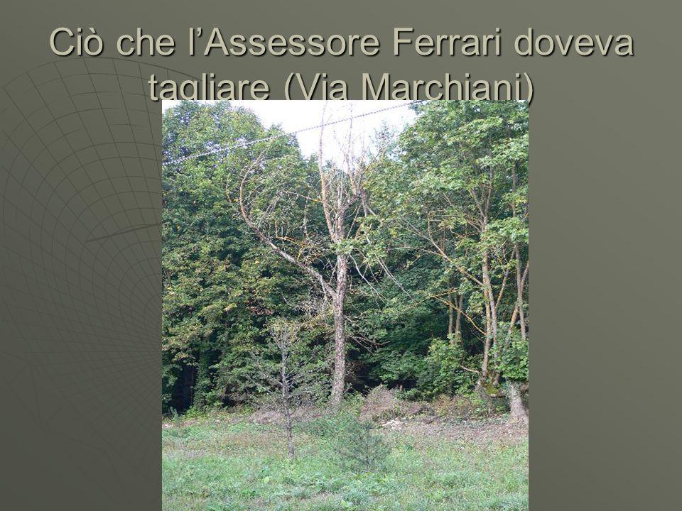 Ciò che lAssessore Ferrari doveva tagliare (Via Marchiani)