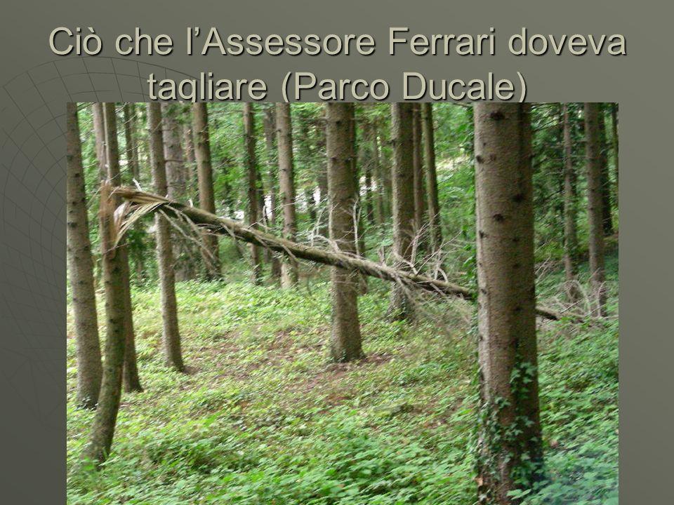 Ciò che lAssessore Ferrari doveva tagliare (Parco Ducale)