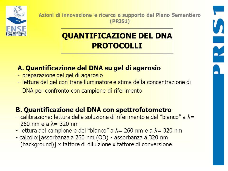 Azioni di innovazione e ricerca a supporto del Piano Sementiero (PRIS1) QUANTIFICAZIONE DEL DNA PROTOCOLLI A. Quantificazione del DNA su gel di agaros