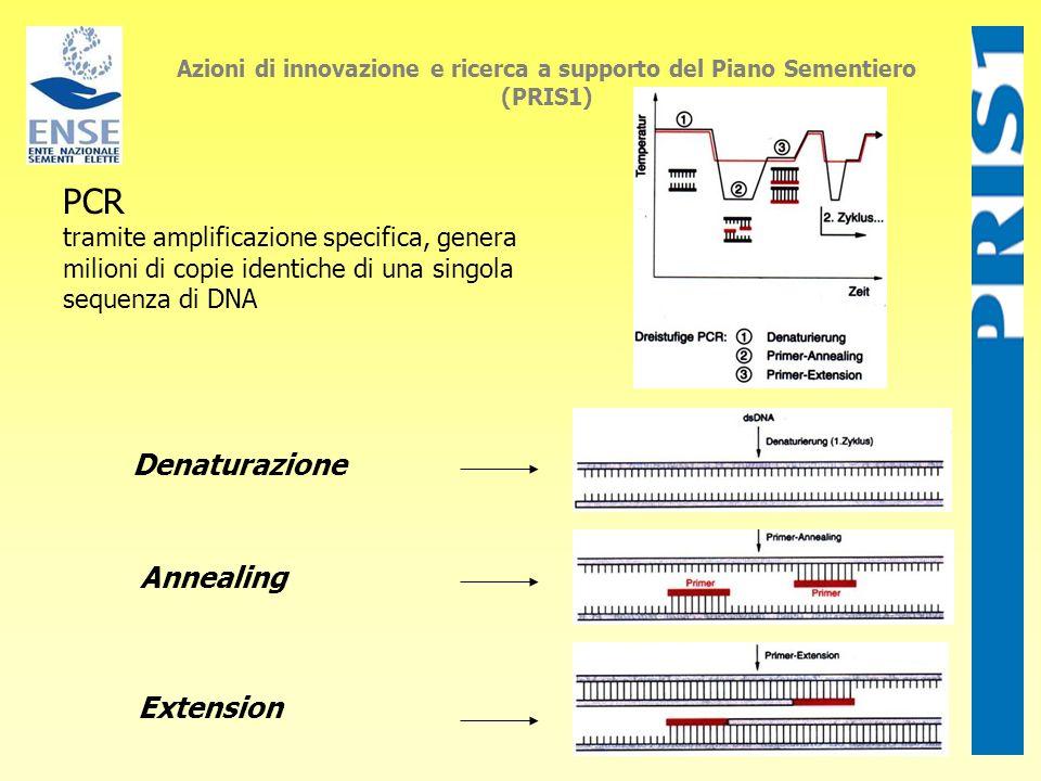 PCR tramite amplificazione specifica, genera milioni di copie identiche di una singola sequenza di DNA Azioni di innovazione e ricerca a supporto del