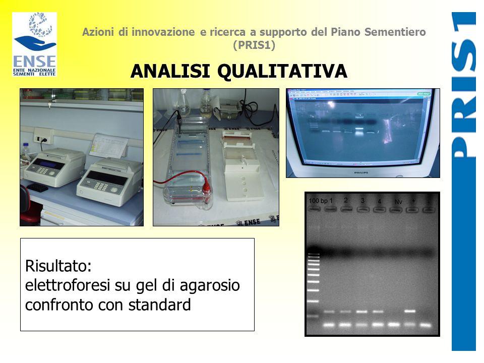 Azioni di innovazione e ricerca a supporto del Piano Sementiero (PRIS1) ANALISI QUALITATIVA Risultato: elettroforesi su gel di agarosio confronto con