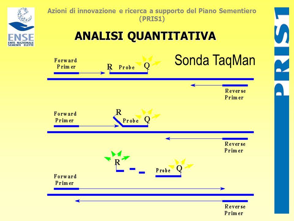 Sonda TaqMan ANALISI QUANTITATIVA Azioni di innovazione e ricerca a supporto del Piano Sementiero (PRIS1)