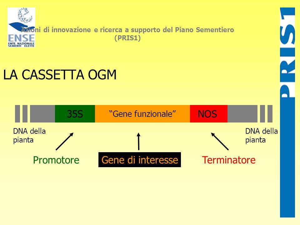 LA CASSETTA OGM Promotore Gene di interesseTerminatore 35SNOS Gene funzionale DNA della pianta DNA della pianta Azioni di innovazione e ricerca a supp