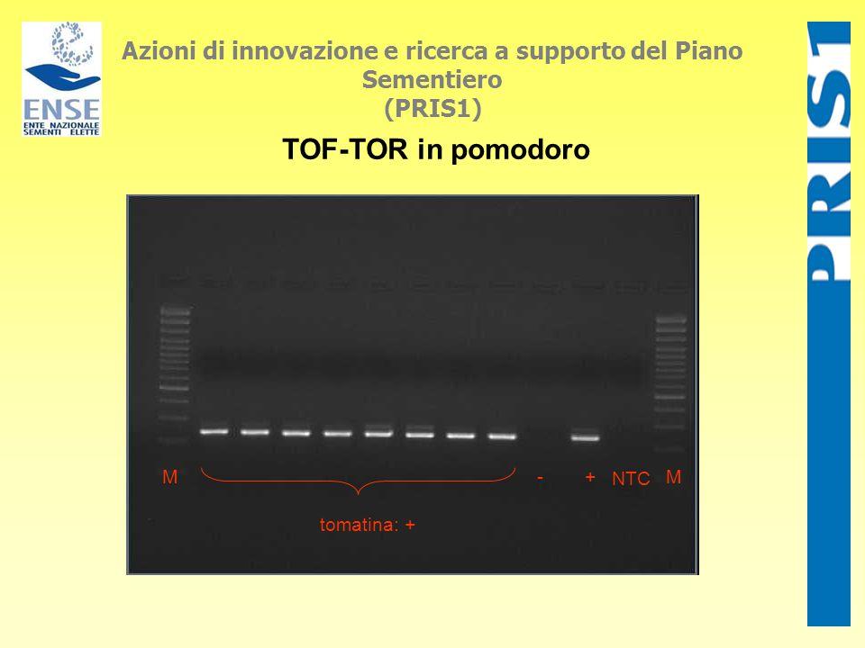 Azioni di innovazione e ricerca a supporto del Piano Sementiero (PRIS1) TOF-TOR in pomodoro tomatina: + M+- NTC M