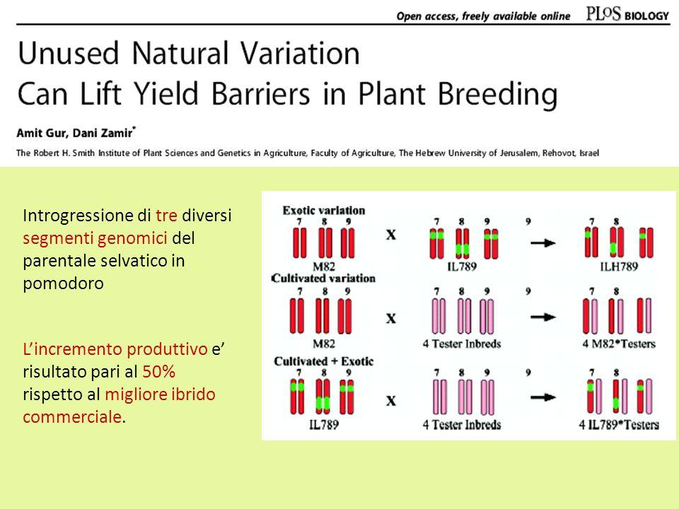 Introgressione di tre diversi segmenti genomici del parentale selvatico in pomodoro Lincremento produttivo e risultato pari al 50% rispetto al miglior